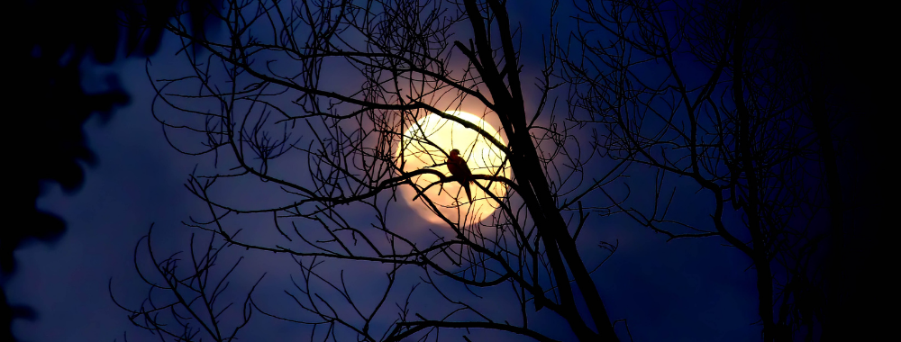 Eerie looking bird in a leafless tree at night during a full moon during spooky October Events on the Crystal Coast